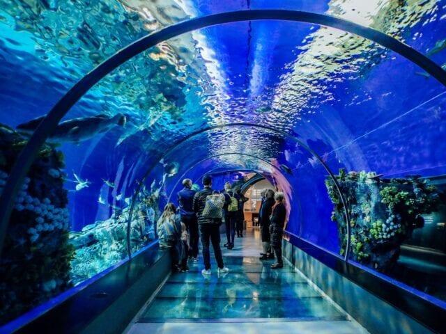 Oplev akvarierne i Den Blå Planet