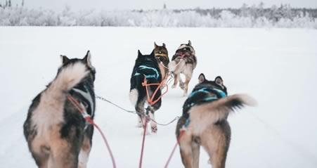 Til Lapland med Tog