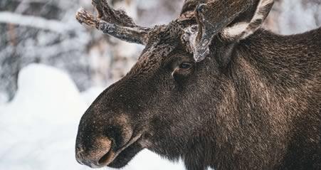 Besøg Narvik i Nord Norge