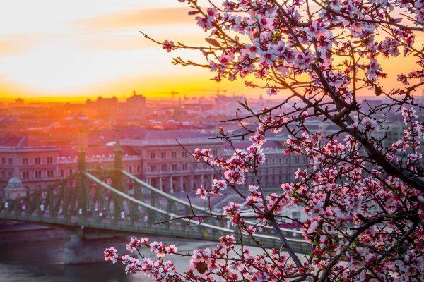 budapest-forår-gønrejs